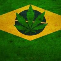 A história da maconha no Brasil por Elisaldo Araújo