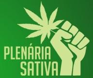 plenaria sativa3